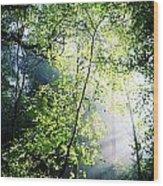 Deciduous Wood, Killarney National Wood Print
