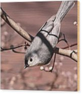Decked Out - Tufted Titmouse Wood Print