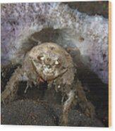 Decorator Crab With Mauve Sponge Wood Print