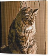 Deep In Kitty Thought Wood Print