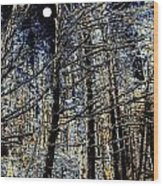 Deep In The Moonlit Forest Wood Print