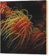 Deep Ocean Coral Polyp Wood Print