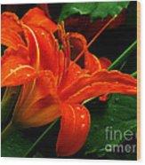 Deep Orange Day Lily Wood Print
