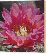 Deep Pink Cactus Flower Wood Print