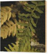 Deep Woods Fern Wood Print