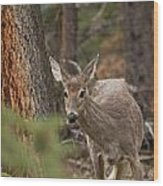 Deer 1660 Wood Print