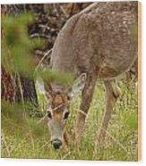 Deer 1661 Wood Print