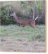 Deer At Viera Wood Print