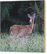 Deer - Doe - I Heard Something Wood Print