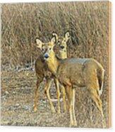 Deer Duo Wood Print
