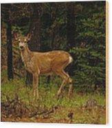 Deer Gazing  Wood Print