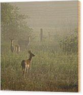 Deer In Foggy Field Wood Print