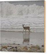Deer In Ocean Surf Wood Print