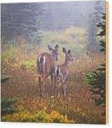 Deer In The Fog In Paradise Park In Mt Wood Print