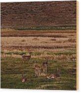 Deer In The Golden Meadow Wood Print
