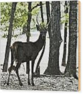 Deer In The Woods Wood Print