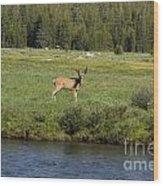 Deer In Tuolumne Meadow Wood Print