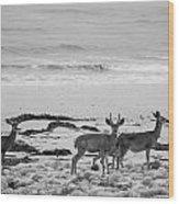 Deer On Beach Black And White Wood Print