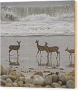 Deer On Beach Wood Print