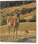 Deer On Mountain 2 Wood Print