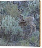 Deer Scratching Itch Wood Print
