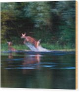 Deer Splash Wood Print