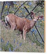 Deer Standing In Wildflowers Wood Print