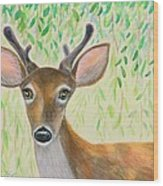 Deer Visitor Under The Willow Tree Wood Print