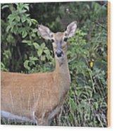 Deer Watch Wood Print