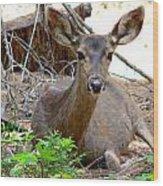 Deer Watching Wood Print