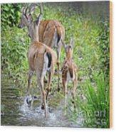 Deer Running In Stream Wood Print