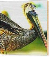 Deerfield Pelican Wood Print