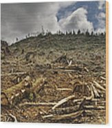 Deforested Area Wood Print by Ned Frisk