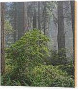 Del Norte Redwoods Wood Print