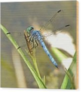 Delicate Dragonfly Wood Print