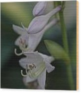 Delicate Lillies Wood Print
