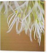 Delicate Petals Wood Print