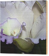 Delicate Purple Orchid Wood Print