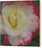 Delicate Rose Wood Print