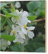 Delicate White Flower Wood Print