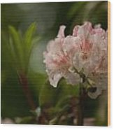 Delicately Peach Wood Print