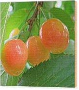 Delicious Plums On The Branch Wood Print