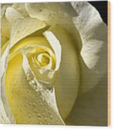 Delightful Yellow Rose With Dew Wood Print