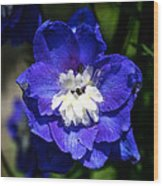 Delphinium Face Wood Print
