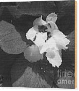 Delphinium From The Magic Fountains Hybrid Named Blue With White Bee Wood Print