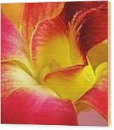 Dendribium Malone Or Hope Orchid Flower Wood Print