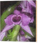 Dendrobium Anosium Wood Print