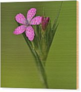 Deptford Pink Wood Print