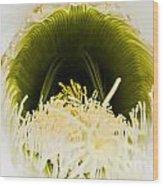 Depths Of The Cactus Flower Wood Print