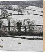 Derwent Valley, Derbyshire, England Wood Print